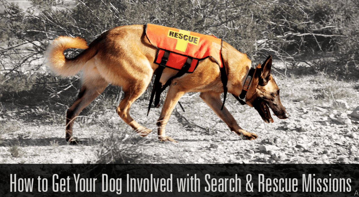 How to Get Your Dog Involved with Search & Rescue