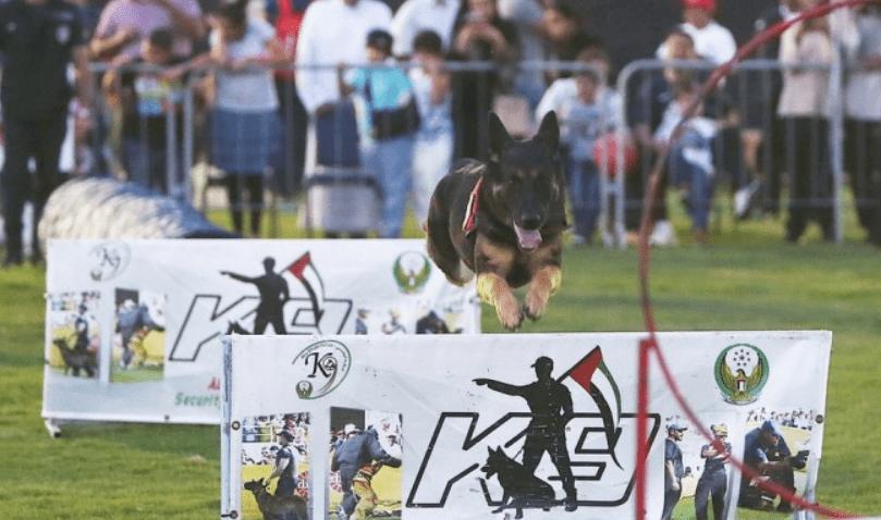 K9 Unit Dog Show At Abu Dhabi Zoo Summer Camp